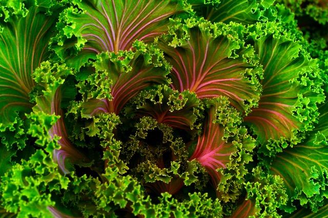 Fiber in Leafy Greens